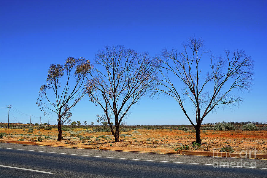Three Trees - Outback Australia By Kaye Menner Photograph