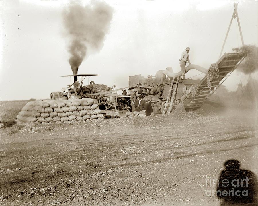 Threshing Machine in Operation, Bagging Grain, California Circa 1910  by California Views Archives Mr Pat Hathaway Archives