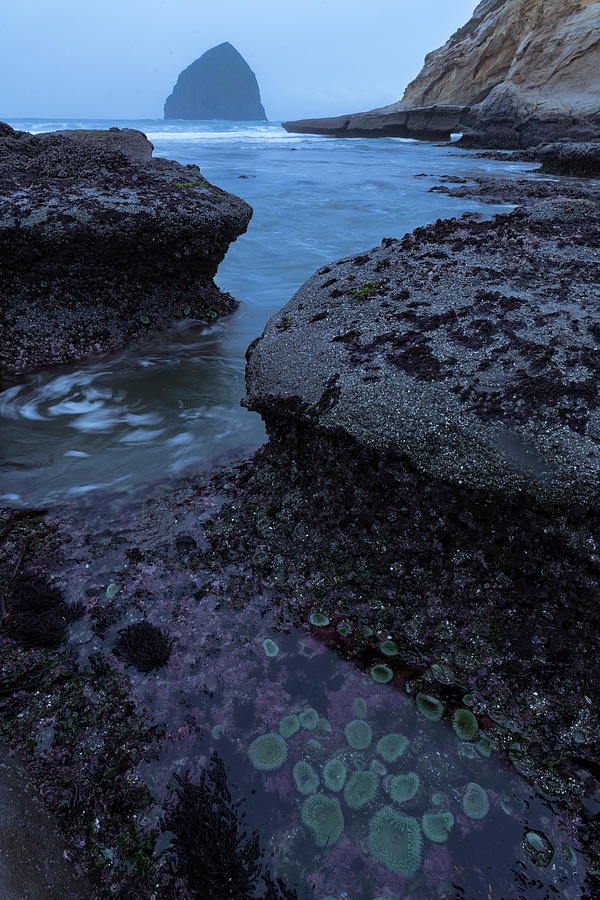 Tide Pool Flow Photograph