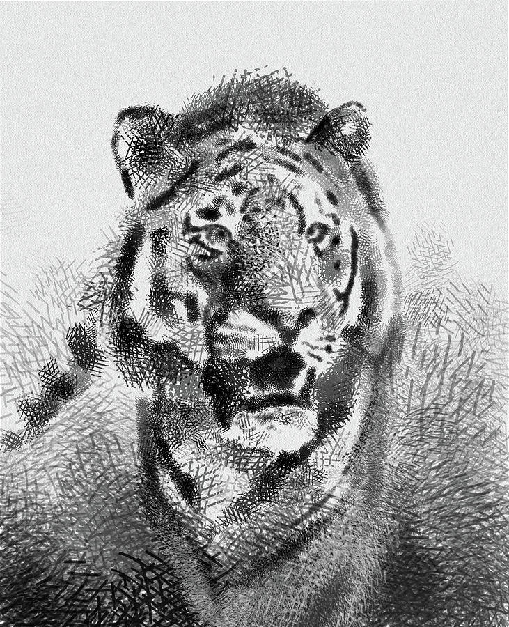 Tiger Drawing Vintage Digital Art