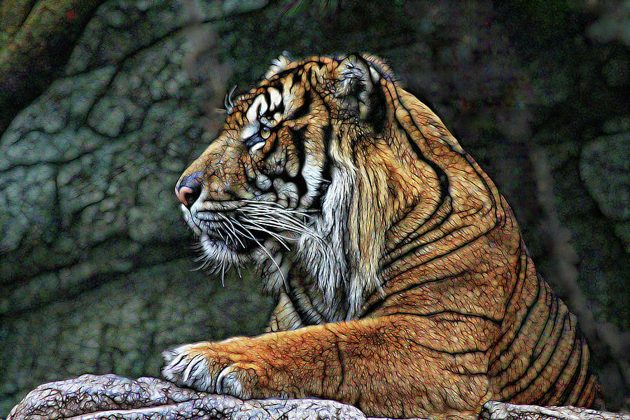 Tiger King Photograph by Shane Bechler