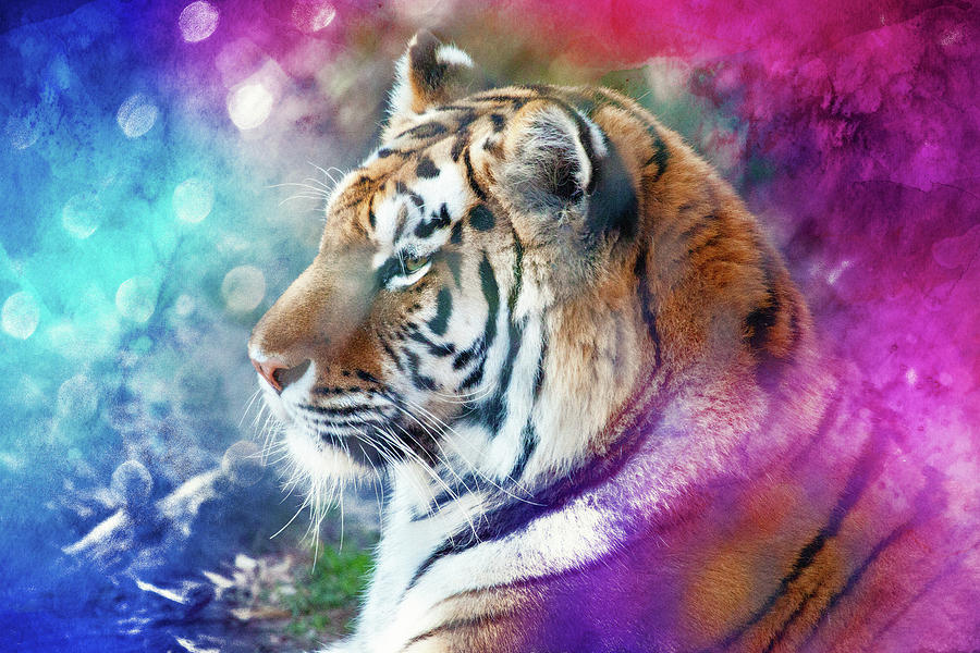 Tiger Mystery In Colors Photograph
