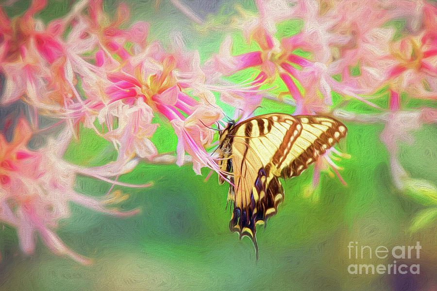 Tiger Swallowtail Butterfly On Pink Native Azalea by Sharon McConnell