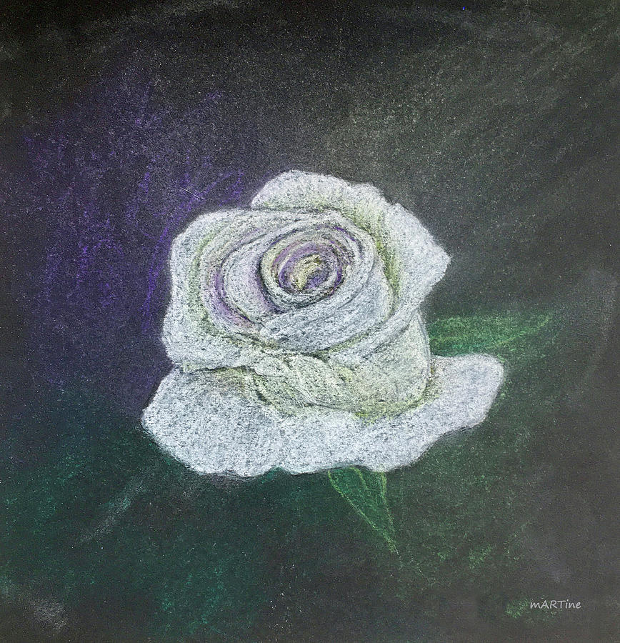 till The White Rose Blooms Again Drawing