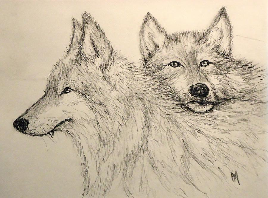 Wolves Drawing - Timberwolf by Pete Maier