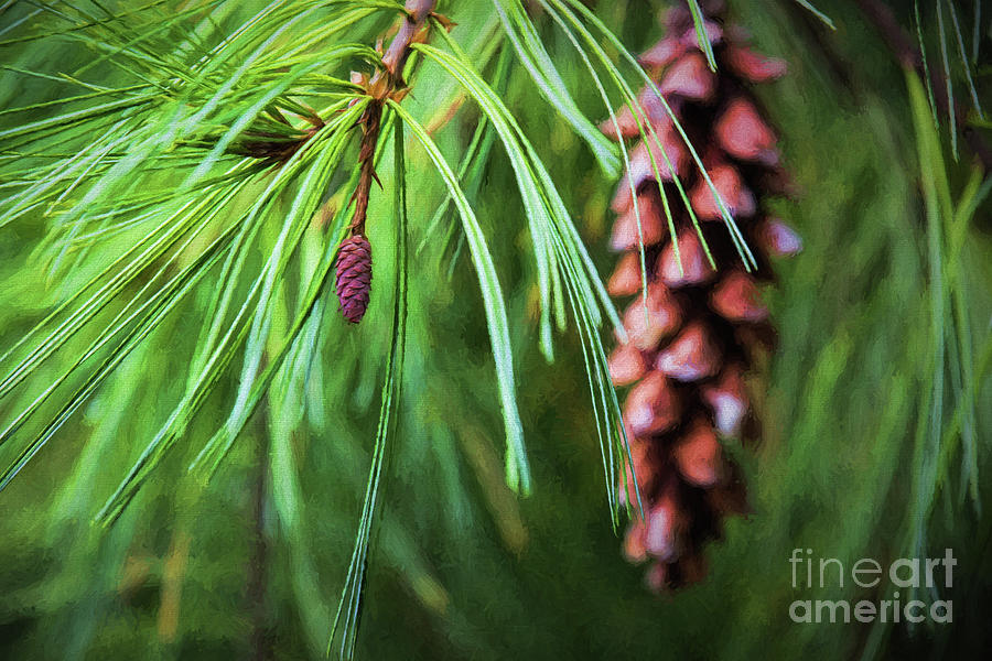 Tiny Pine Cone by Sharon McConnell
