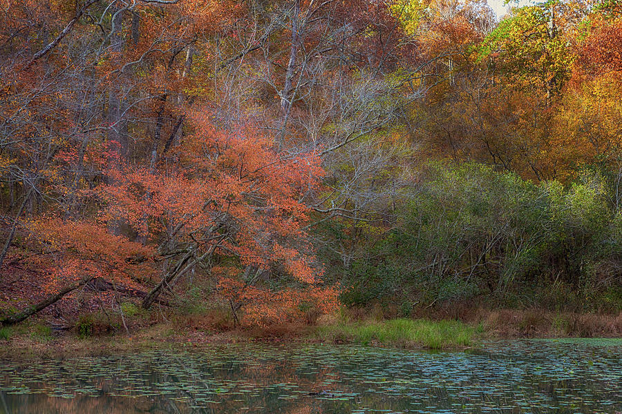 Tishomingo's Autumn Pond by Susan Rissi Tregoning