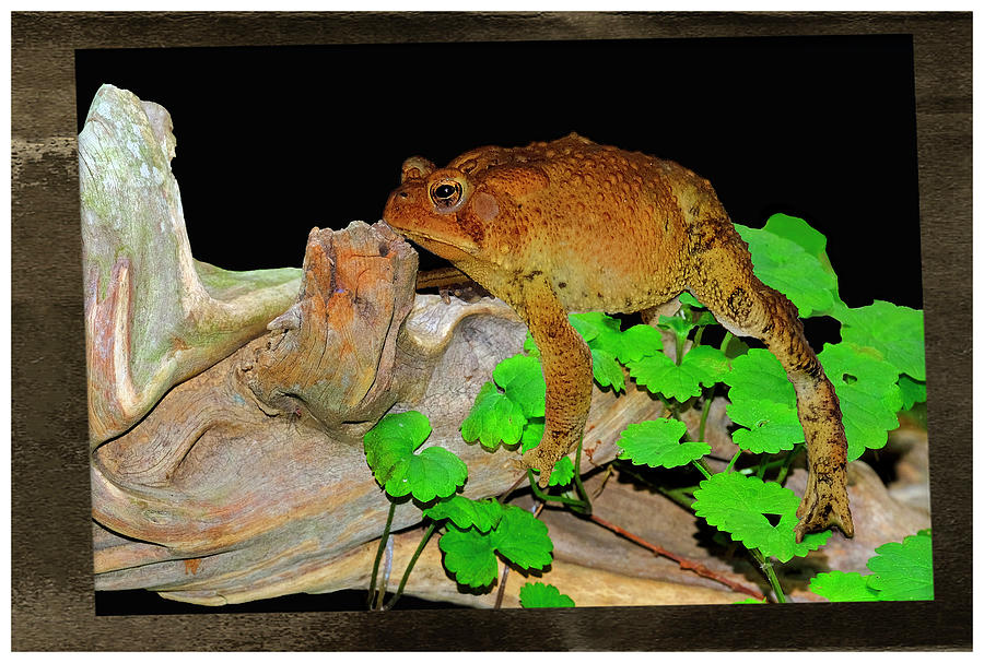 Toad On Driftwood Mixed Media