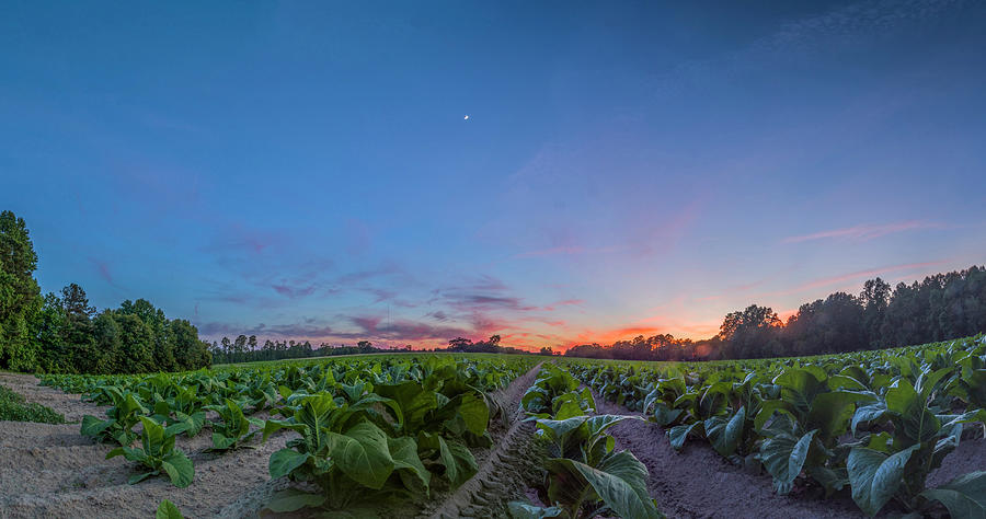 Sunset Photograph - Tobacco Sunset by Melissa Southern