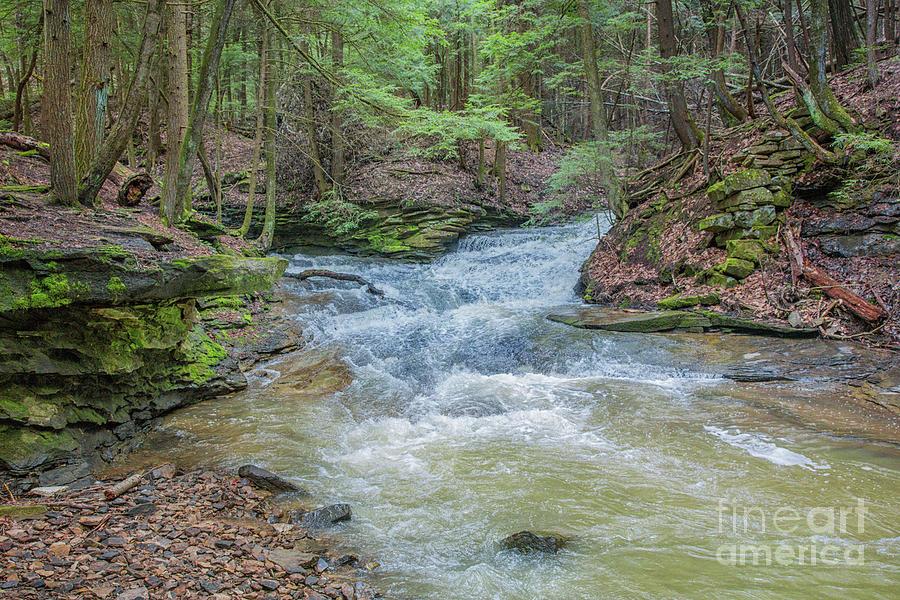 Todd Nature Reserve Stream One Digital Art