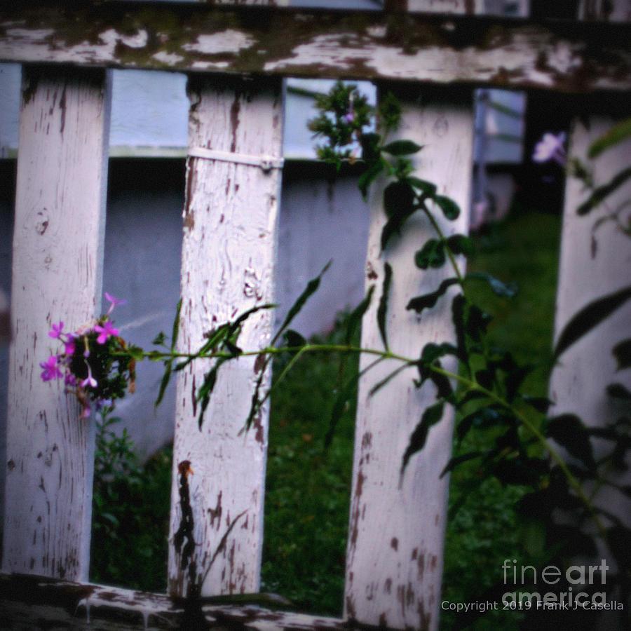 Flower Photograph - Tolerance by Frank J Casella