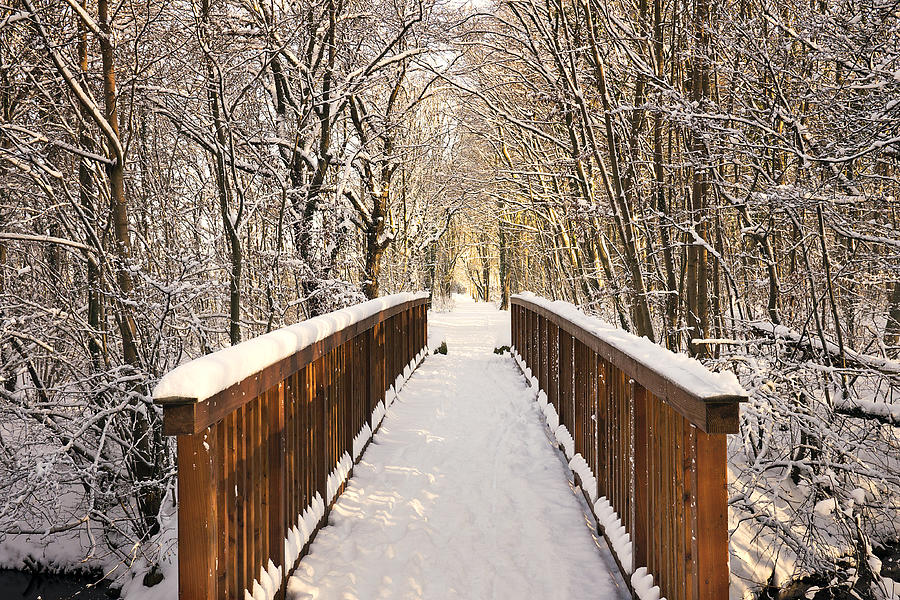 Towards The Winter Wonderland Photograph by Bernd Schunack