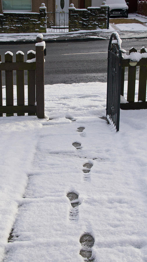 Traces In The Snow Photograph