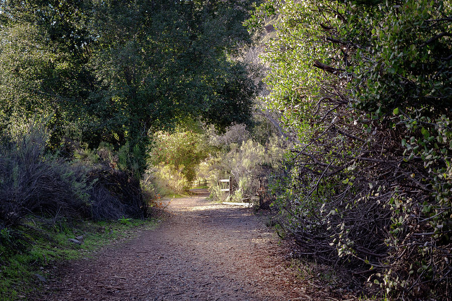 Trail With Trees by Alison Frank