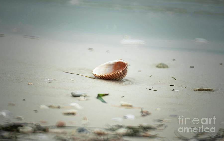 Treasure Photograph - Treasure From The Sea by Felix Lai