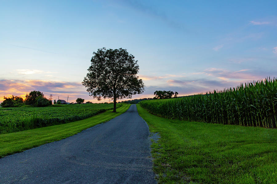 Tree Along Country Road In Pennsylvania Photograph