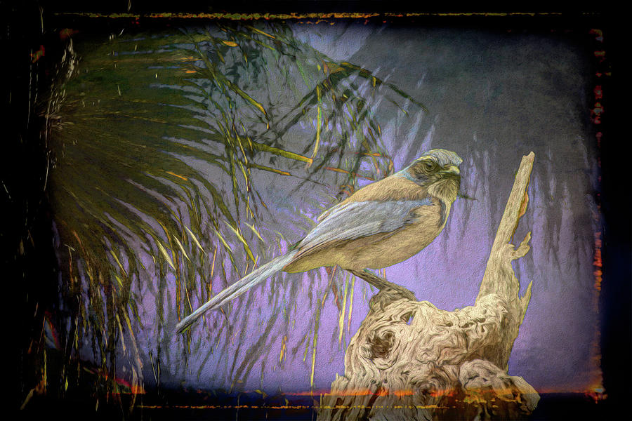 Tree and Blue Jay II Art by Linda Brody