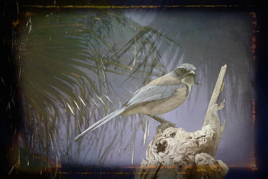 Tree and Blue Jay III Art by Linda Brody