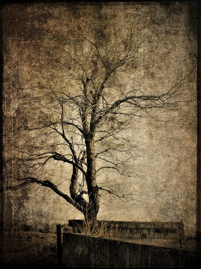 Tree and Old Wall by Diane Chandler