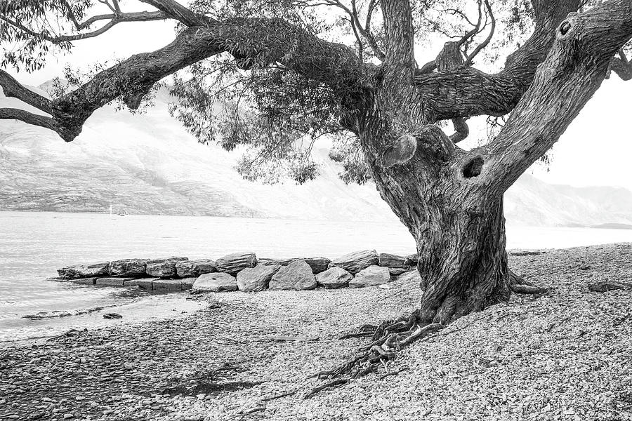 Travel Photograph - Tree at Lake Wakatipu, Queenstown, N.Z. by Venetia Featherstone-Witty