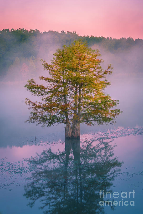 Tree at Sunrise in Mist and Fog by Ranjay Mitra