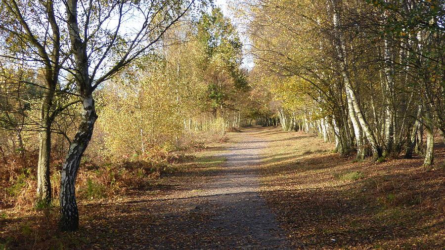 Tree Avenue In Autumn Sunshine Photograph