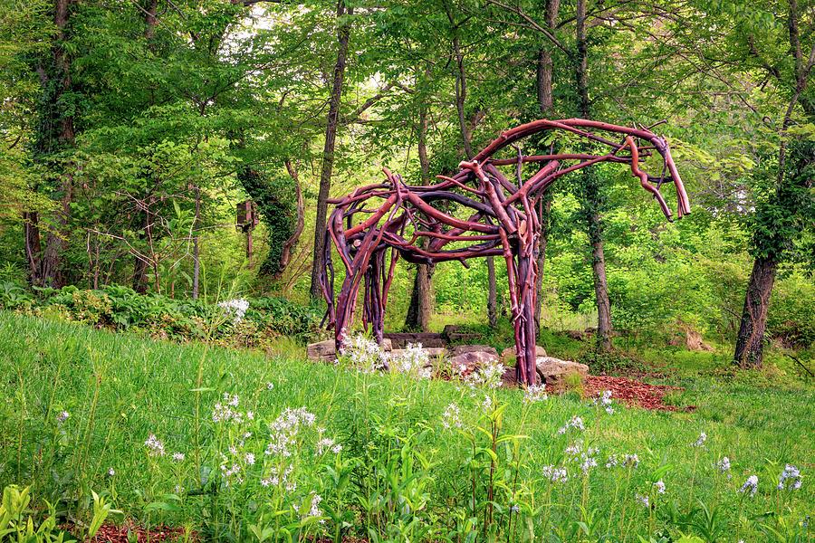 Tree Branch Horse In Compton Gardens - Northwest Arkansas Photograph