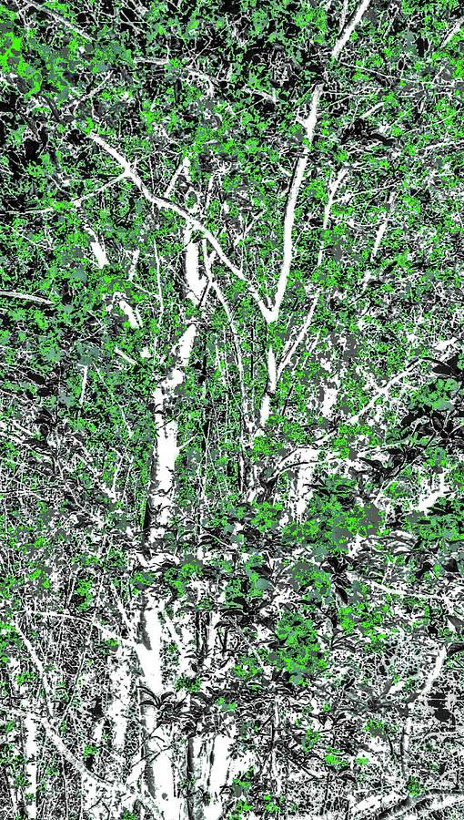 Tree Branch Of Green Art Digital Art