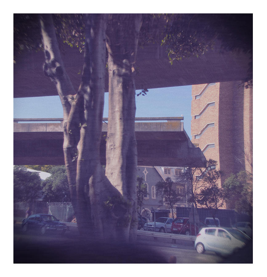 Tree By Road In City Photograph by Frank Swertz / EyeEm