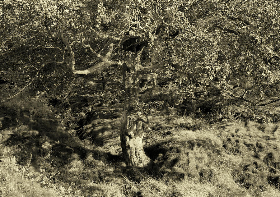 Tree dappled summer light by Jerry Daniel