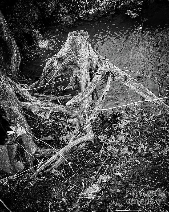 Tree Decay Photograph