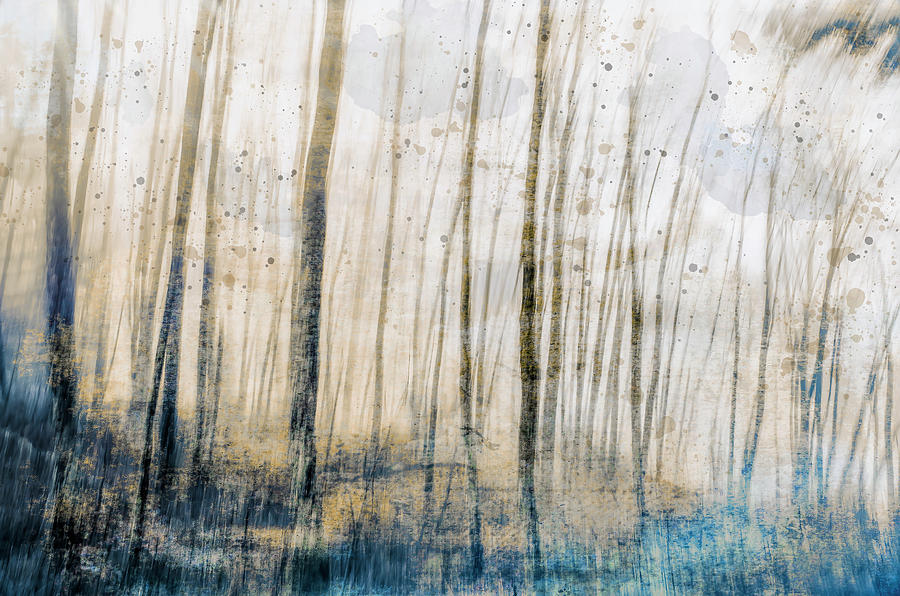 Tree Dreams In Blue Photograph