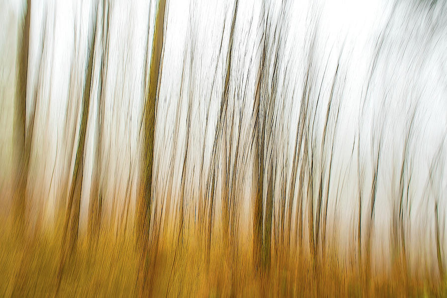 Tree Dreams In Orange Photograph