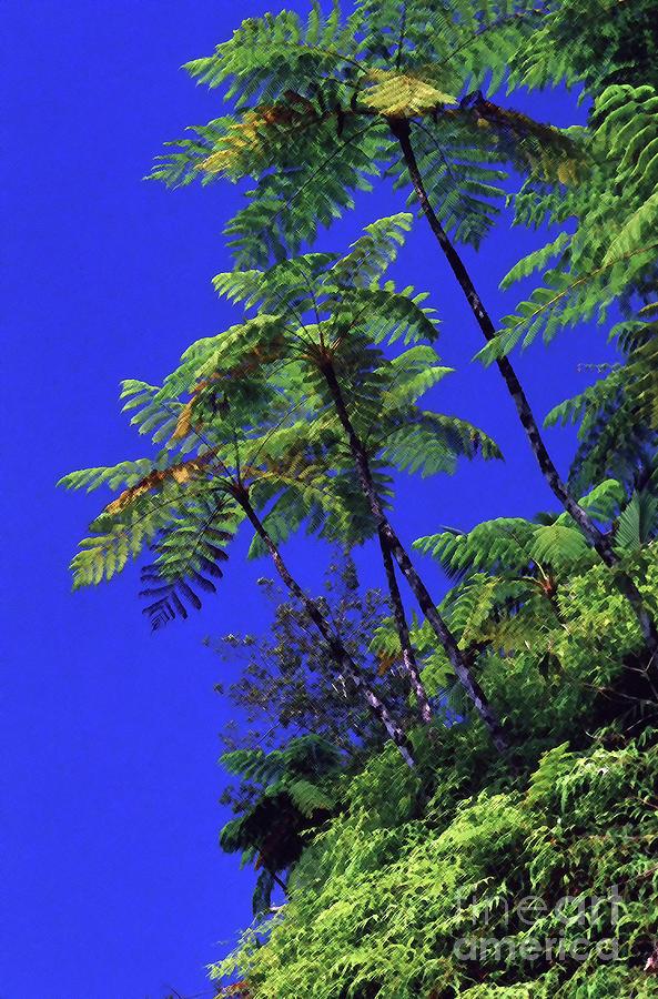Tree Ferns and Blue Sky by Thomas R Fletcher
