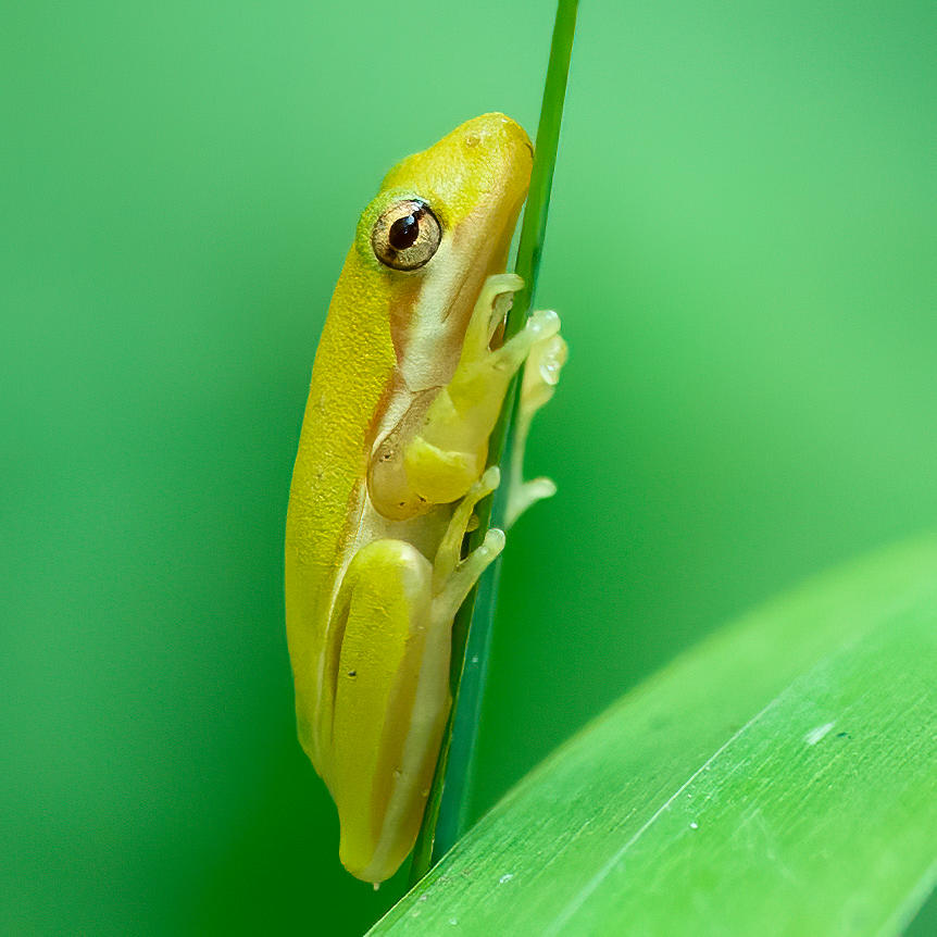 Tree Frog 2 Photograph by Larry Maras