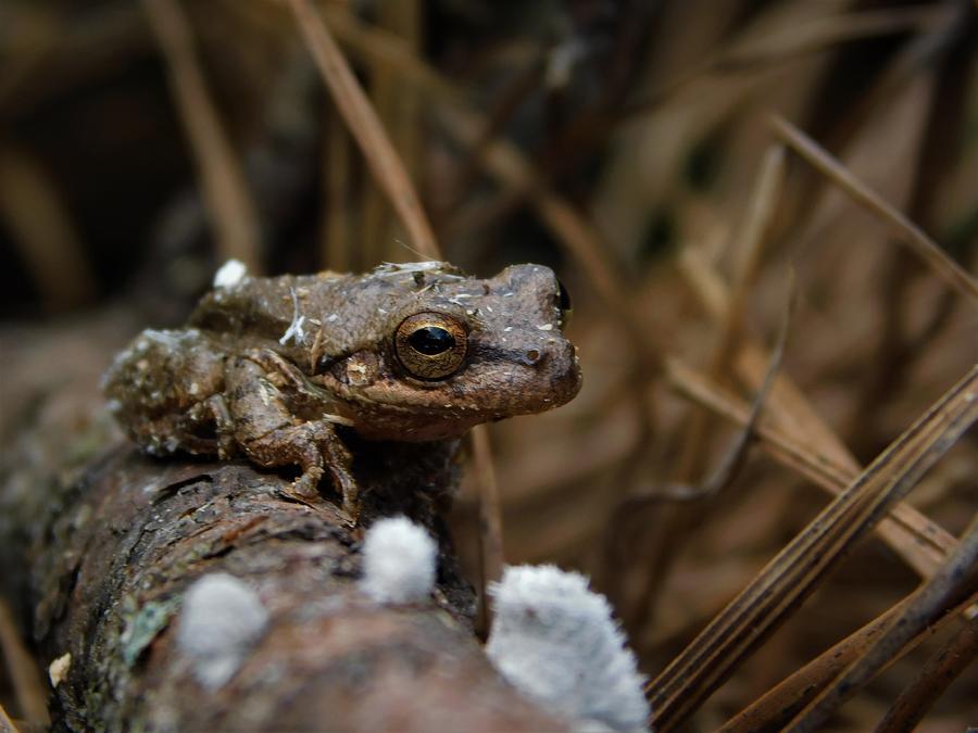 Tree Frog by Carl Moore