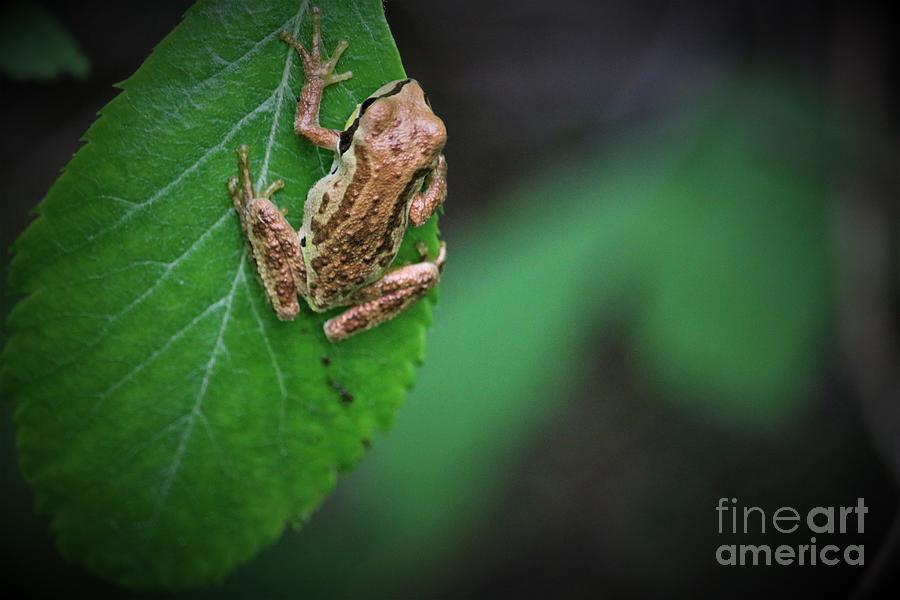 Tree Frog Still Hanging On Digital Art
