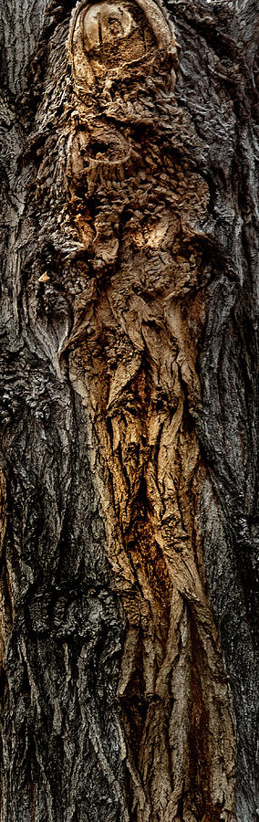 Wisconsin Photograph - Tree Gnome by Paul Malen