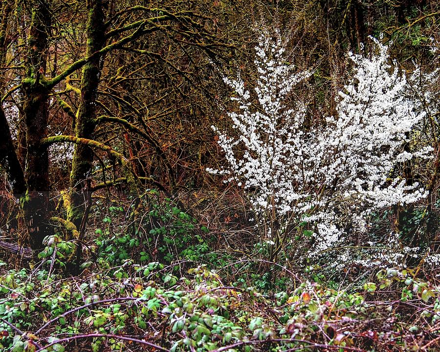 Tree In Bloom Photograph