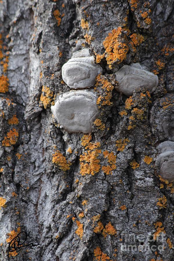Tree Lichen by Ann E Robson