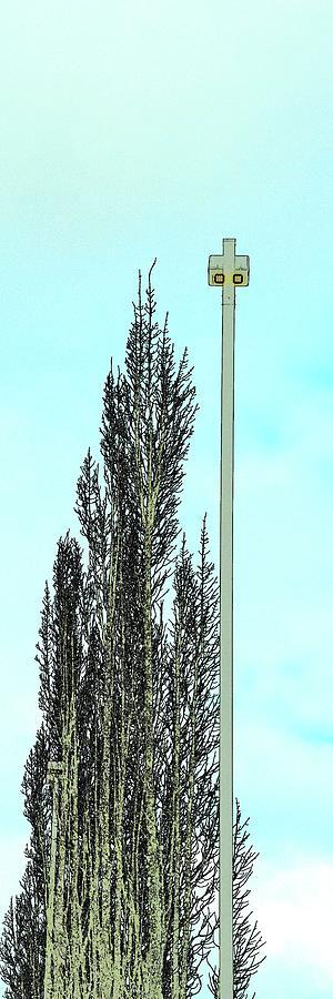 Tree Light Pole Blue Sky Photograph
