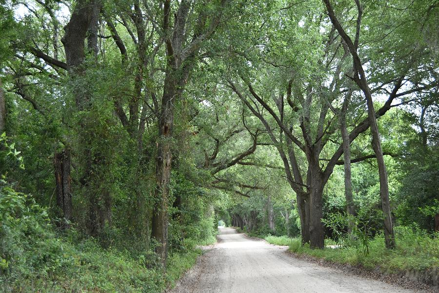 Tree Lined Road Photograph