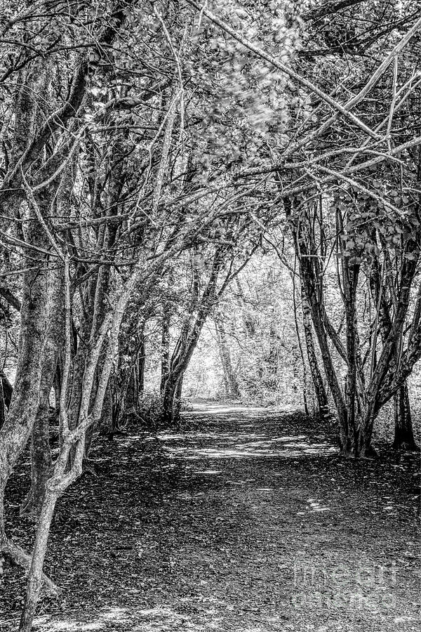 Tree-lined Wooded Path In Monochrome Photograph