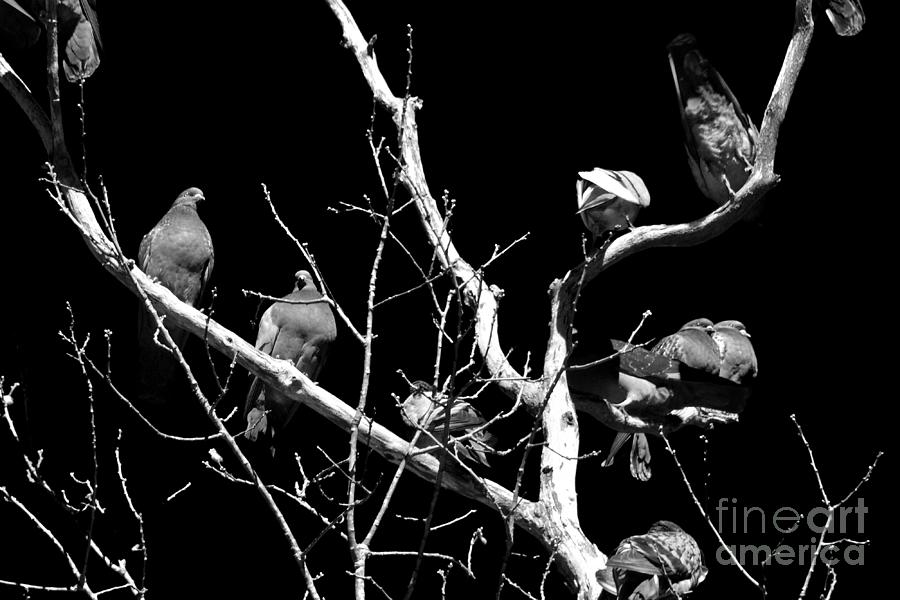 Tree of Pigeons by Phil Perkins