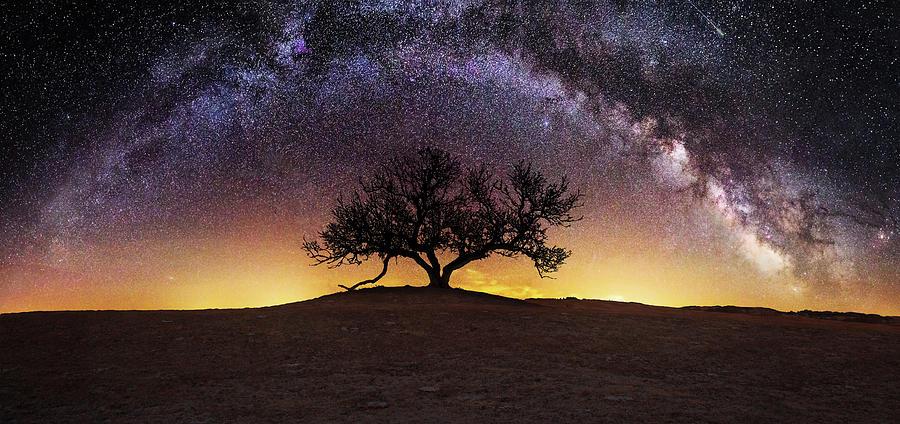 Milky Way Photograph - Tree of Wisdom by Aaron J Groen