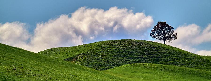 Tree On A Hill by Paul Freidlund