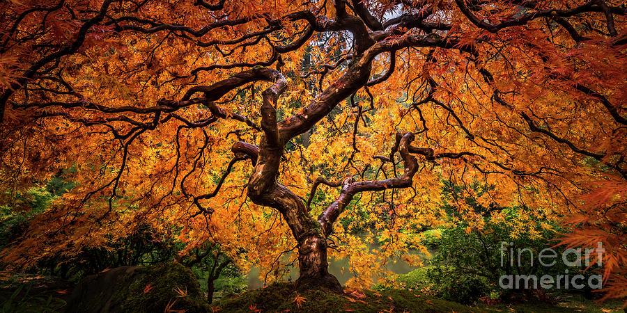 Tree on Fire by Tim Shields