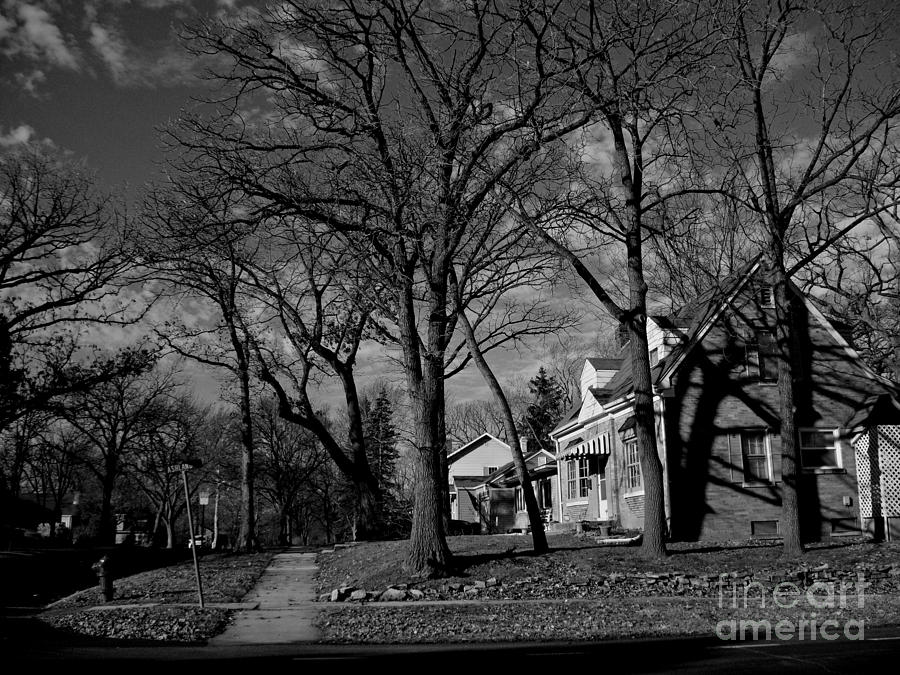Tree Patterns Shadows and Houses by Frank J Casella