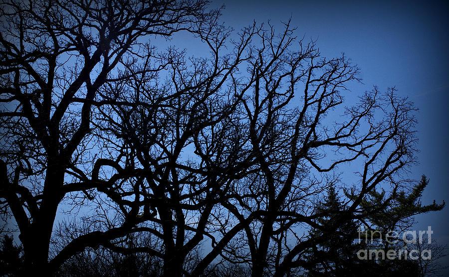 Tree Psychology Photograph