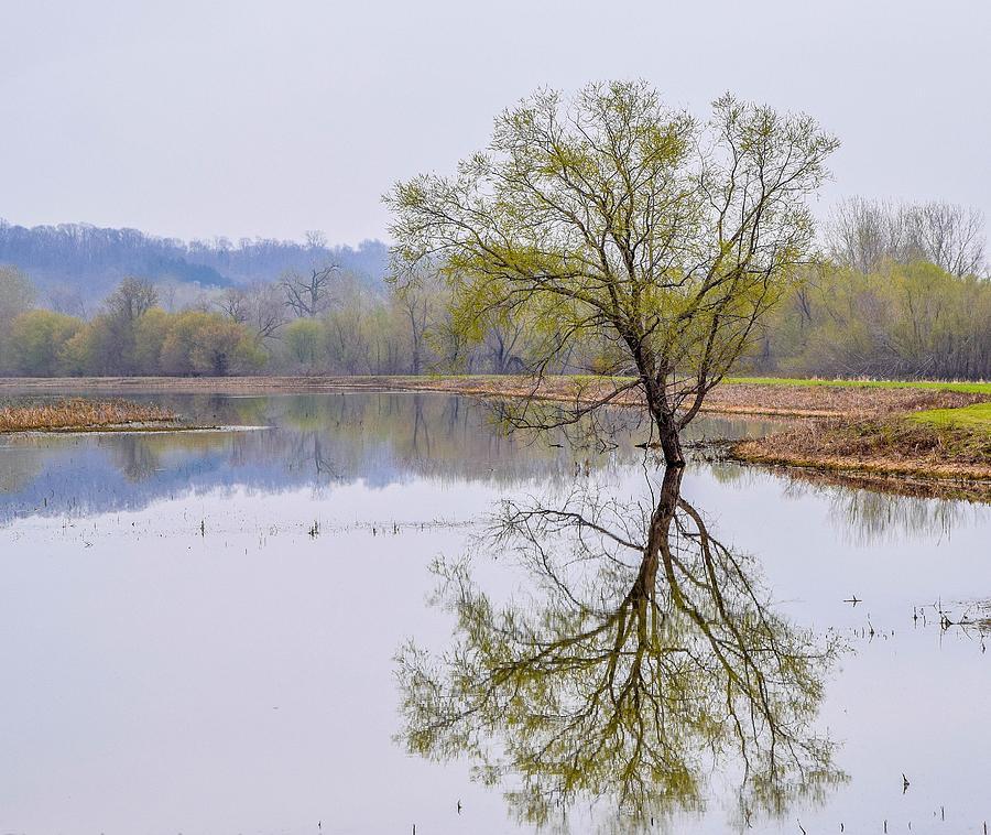 Tree Reflection Photograph
